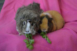 zajac i tamara jedza natke