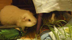 Puffy i Zajac